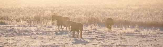 Hästar på landet
