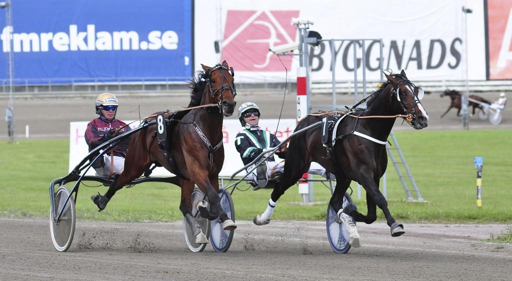 Tiberius F avgör en galoppfylldfylld E3-final i öppna klassen. / Foto: travfilosofen.se