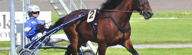Underbara hästar